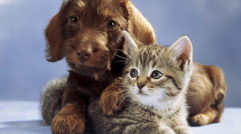 zwierzaki domowe odpowiednie dla dzieci